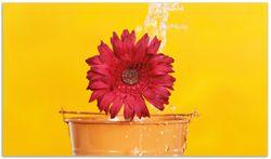 Herdabdeckplatte Rote Blüte im Blumentopf - frisch begossen – Bild 1