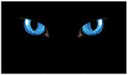 Herdabdeckplatte Blaue Katzenaugen bei Nacht – Bild 1