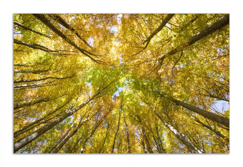 Herdabdeckplatte Goldener Herbst - Bunte Blätter von unten betrachtet – Bild 1