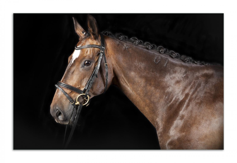 Herdabdeckplatte Herausgeputztes Pferd mit Geschirr – Bild 1