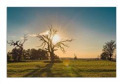 Herdabdeckplatte Alte knochige Bäume bei Sonnenuntergang – Bild 1