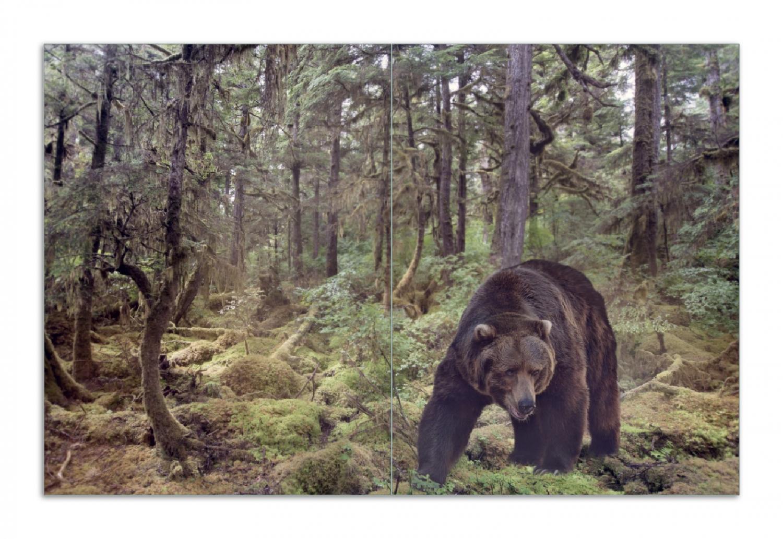 Herdabdeckplatte Gefährlicher Grizzlybär im Wald – Bild 1