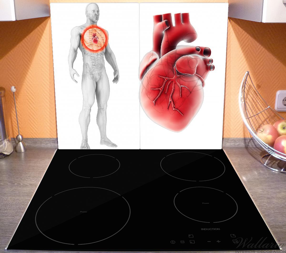 Herdabdeckplatte Anatomie des Menschen – Herz in Nahansicht – Bild 3