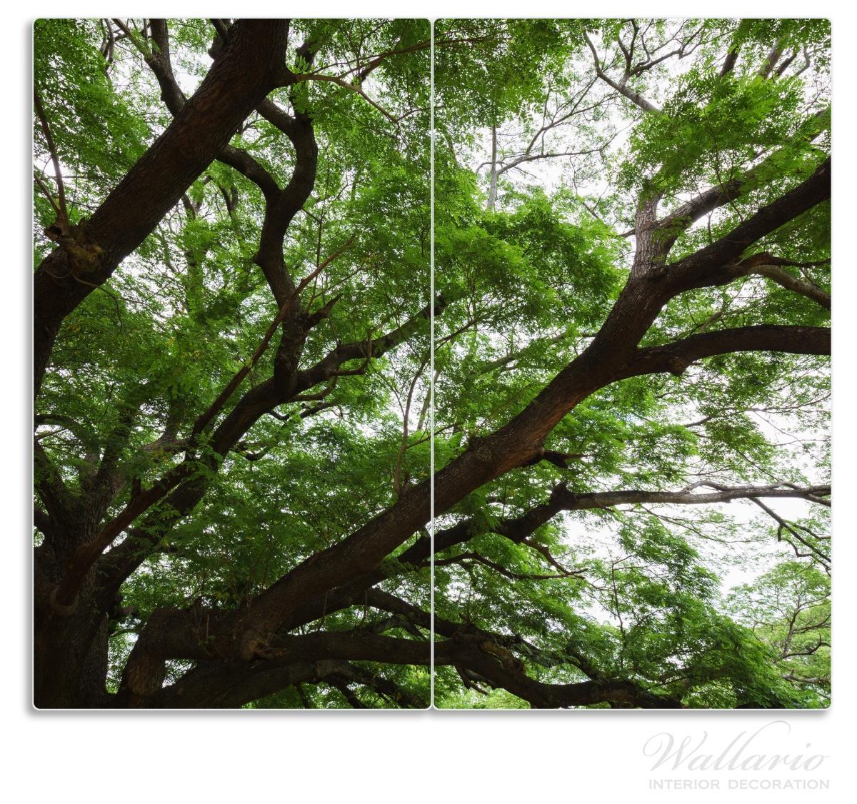 Herdabdeckplatte Gigantischer Regenbaum von unten – Bild 1