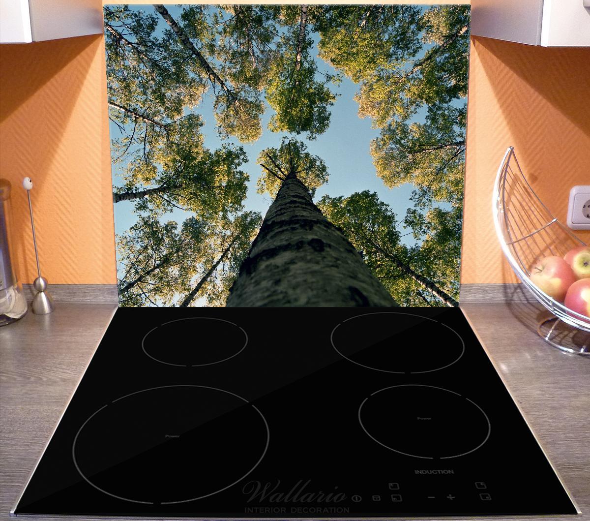 Herdabdeckplatte Birkenwald von unten betrachtet – Bild 3