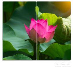 Herdabdeckplatte Pinke Lotusblüte im Sonnenschein – Bild 1