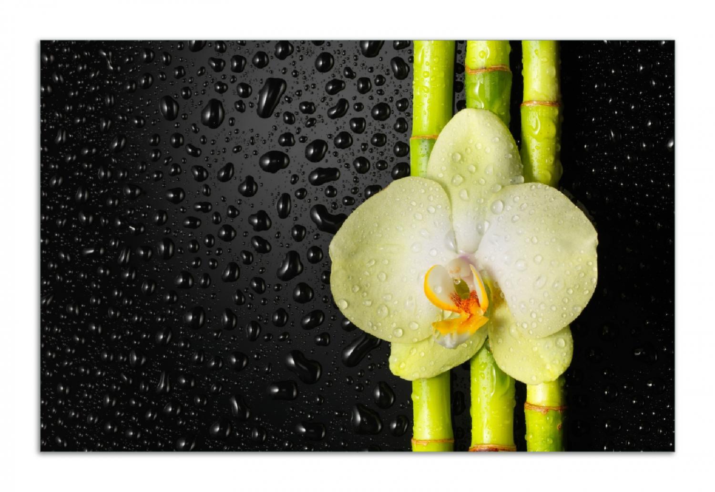 Herdabdeckplatte Grüne Orchidee mit Bambus auf schwarz - Regentropfen – Bild 1