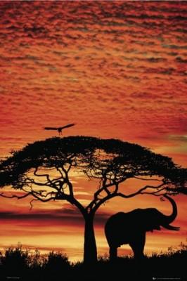 Poster Africa Sunset Elefant Afrika Sonnenuntergang Savanne 61 X