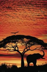 Poster Africa Sunset - Elefant