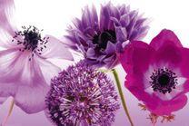 Poster Purple summer 001