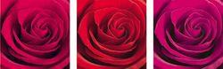 Wandaufkleber 3er Set Roter Rosentraum – Bild 1