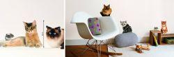 Wandsticker Süße Rasse Katzen mit Maus