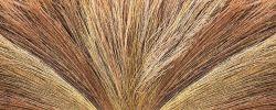 Glasbild Abstrakte Strohgarben