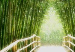 Vliestapete Bambusweg mit Brücke – Bild 2