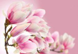 Vliestapete Magnolien in Rosa – Bild 2