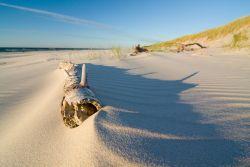 Glasbild Düne und Sandstrand mit Treibholz