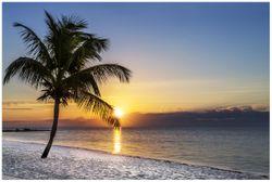 Vliestapete Palme am Strand - Sonnenuntergang über dem Meer – Bild 1