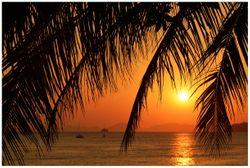 Vliestapete Sonnenuntergang unter Palmenblättern – Bild 1