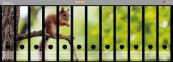 Ordnerrücken Sticker Eichhörnchen auf einem Ast