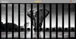 Ordnerrücken Sticker Elefant bei Sonnenaufgang in Afrika schwarzweiß