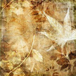 Möbelfolie Herbstlaub – Bild 3