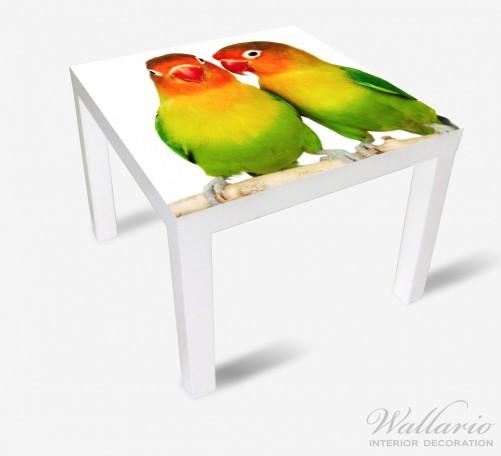 Möbelfolie Papageien auf dem dünnen Ast – Bild 2