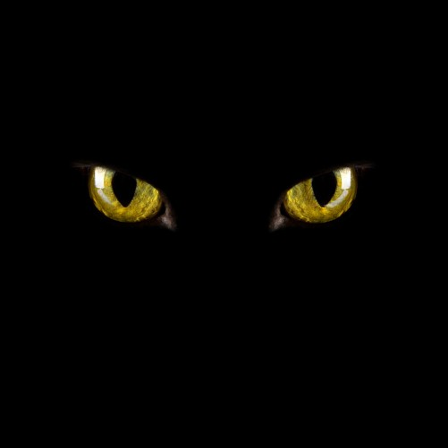 Möbelfolie Gelb leuchtende Katzenaugen bei Nacht – Bild 3