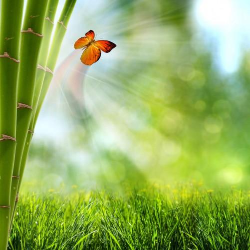 Möbelfolie Schmetterling im Grünen mit Bambus – Bild 3