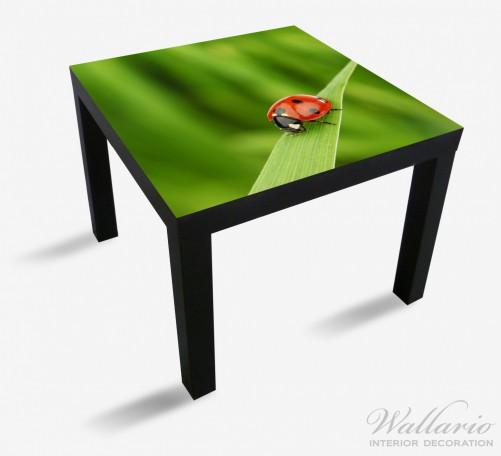 Möbelfolie Marienkäfer auf grünem Blatt – Bild 1