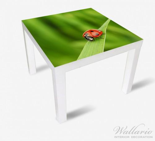 Möbelfolie Marienkäfer auf grünem Blatt – Bild 2