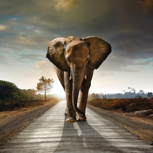 Möbelfolie Elefant bei Sonnenaufgang in Afrika – Bild 3
