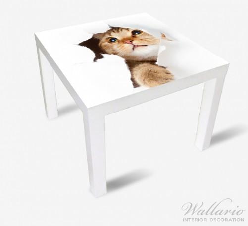 Möbelfolie Katze mit Blick nach oben – Bild 2