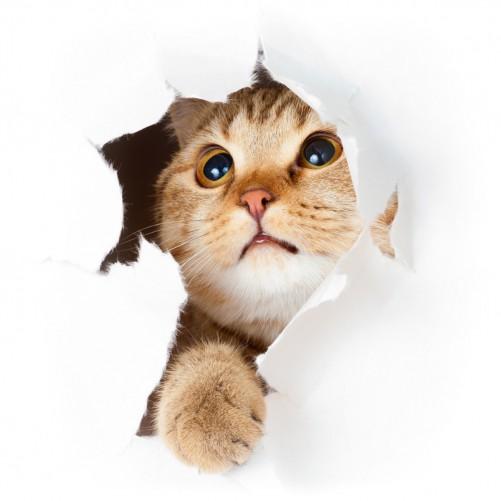Möbelfolie Katze mit Blick nach oben – Bild 3