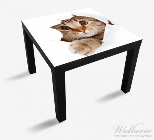Möbelfolie Katze mit Blick nach vorn – Bild 1