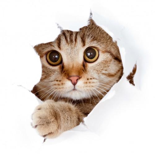 Möbelfolie Katze mit Blick nach vorn – Bild 3