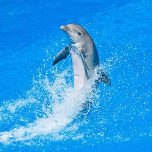 Möbelfolie Fröhlicher Delfin im blauen Wasser – Bild 3