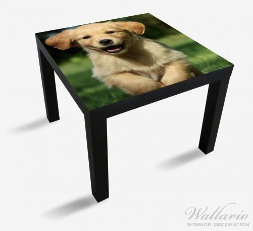 Möbelfolie Süßer Hund - Golden Retriever – Bild 1
