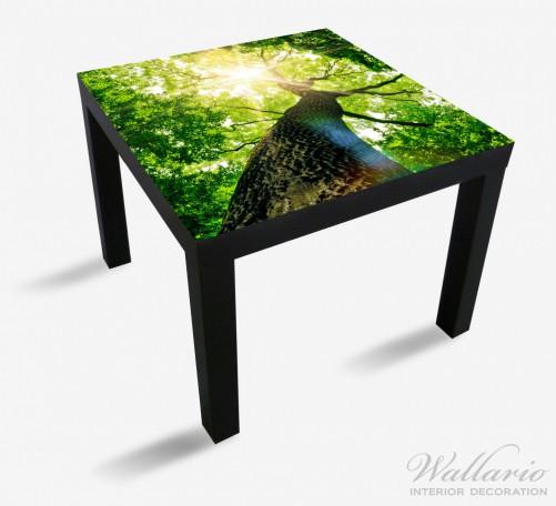 Möbelfolie Laubbaum aus der Froschperspektive – Bild 1
