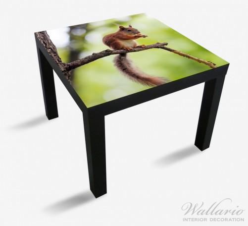Möbelfolie Eichhörnchen auf einem Ast – Bild 1