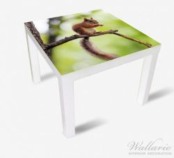 Möbelfolie Eichhörnchen auf einem Ast – Bild 2