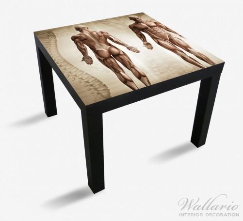 Möbelfolie Anatomie Mensch I – Bild 1