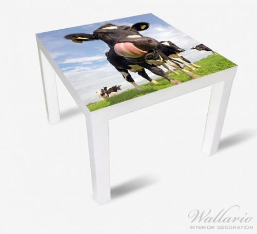 Möbelfolie Lustige Kuh auf der Weide mit herausgestreckter Zunge – Bild 2