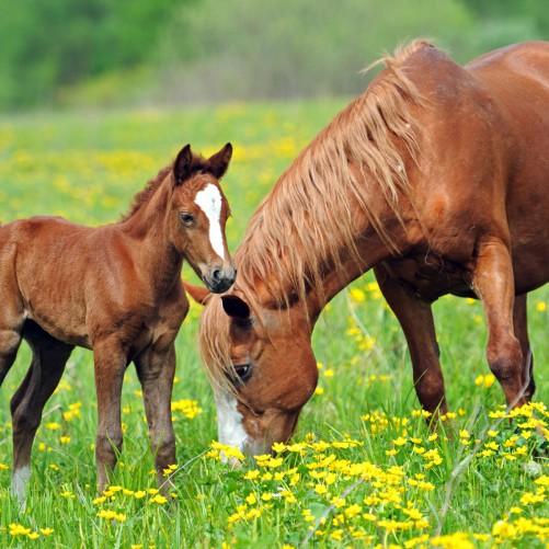 Möbelfolie Pferde auf der Koppel – Bild 3