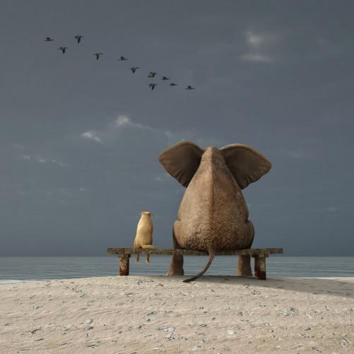 Möbelfolie Elefant und Hund sitzen auf einer Bank – Bild 3