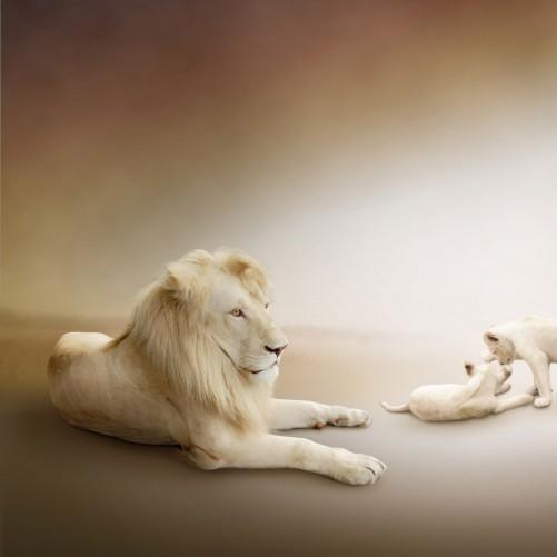 Möbelfolie Löwenfamilie mit Jungtieren – Bild 3