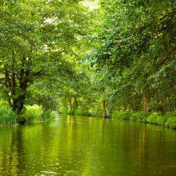 Möbelfolie Spreewald in Brandenburg, grüne Wälder und Spiegelungen im Wasser – Bild 3