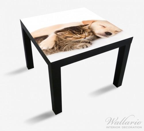 Möbelfolie Katze und Hund in Harmonie - Kuschelnde Tiere – Bild 1