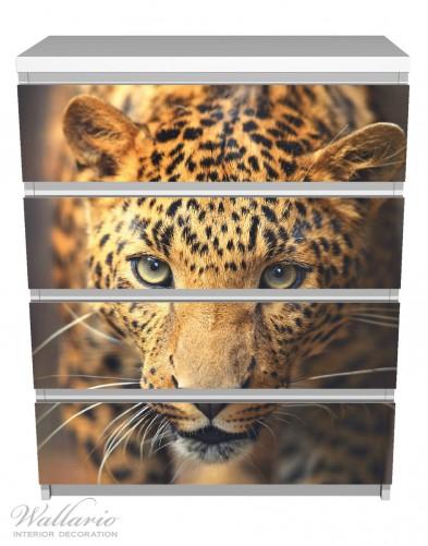 Möbelfolie Leopard in Nahaufnahme bein Laufen – Bild 2
