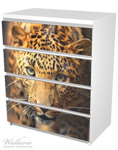 Möbelfolie Leopard in Nahaufnahme bein Laufen – Bild 5
