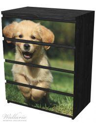 Möbelfolie Süßer Hund - Golden Retriever – Bild 4